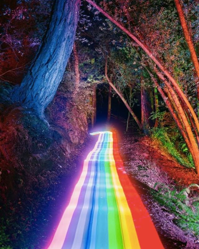 daniel mercadanteIn.  Rainbow Trail in Golden Gate National Recreation Area.  Marin County.  #danielmercadanteIn #rainbowroad #rainbow #goldengate #goldengatenationalpark #millvalley  #oak #trail #hasselbladx1d #mediumformat #doubleexposure #lightpainting