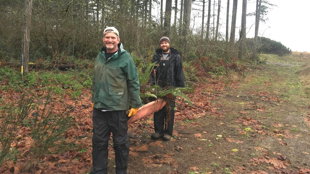 Volunteers salvaging sword fern.