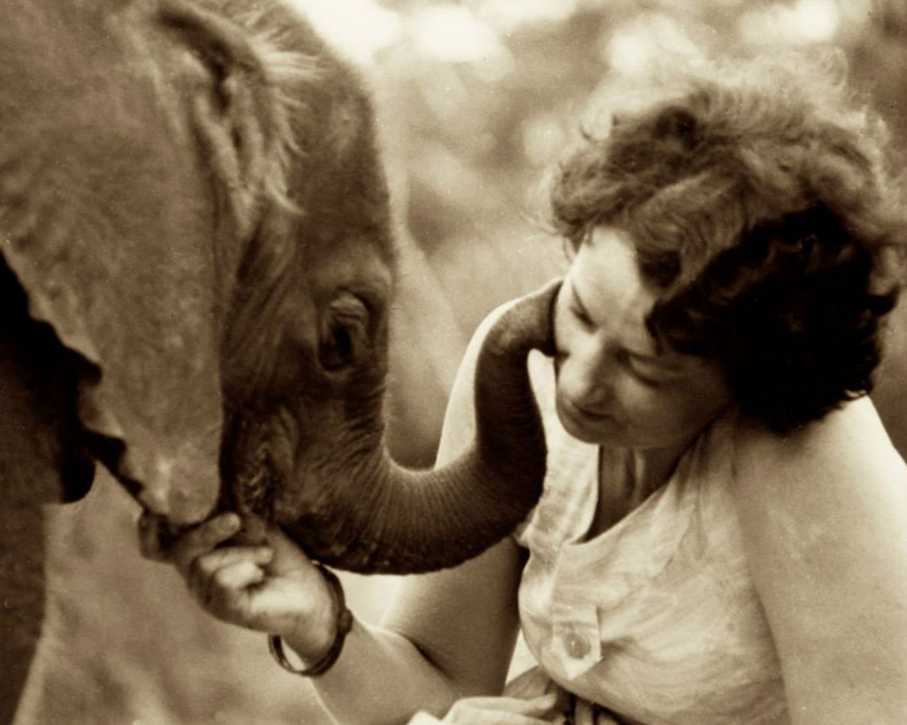Daphne Sheldrick dedicated the last 60 years of her life to the protection of wildlife in Kenya. Read about here contribution to wildlife conservation  here  on Good Nature Travel. Source:  The David Sheldrick Wildlife Trust