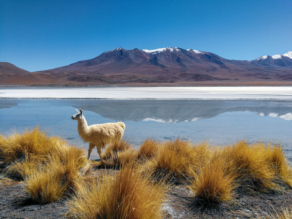 Explore the amazing landscapes of Uyuni in Bolivia. From the Laguna Colorada to wild llama and vincuña sightings - check out the amazing ecotourism opportunities on your trip.