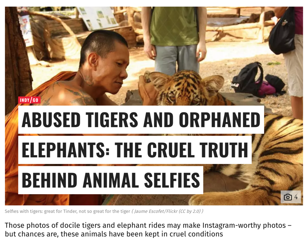 Tiger selfies - the cruel truth behind your vacation photos.
