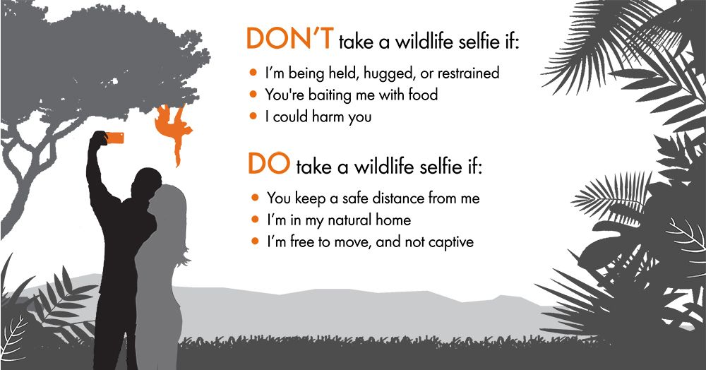 Making sure you aren't contributing to the illegal animal trade is an important part of ecotourism. Be responsible when taking photos with wild animals and follow this code. Animal exploitation for tourism is a growing industry, so it's up to travelers to be smart about their choices.