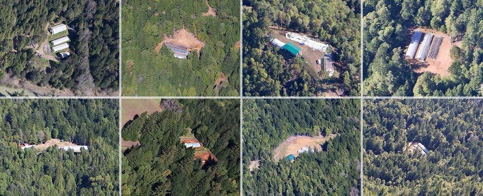 Seen from the air are eight marijuana growing operations hacked from the redwood forests of Humboldt County.