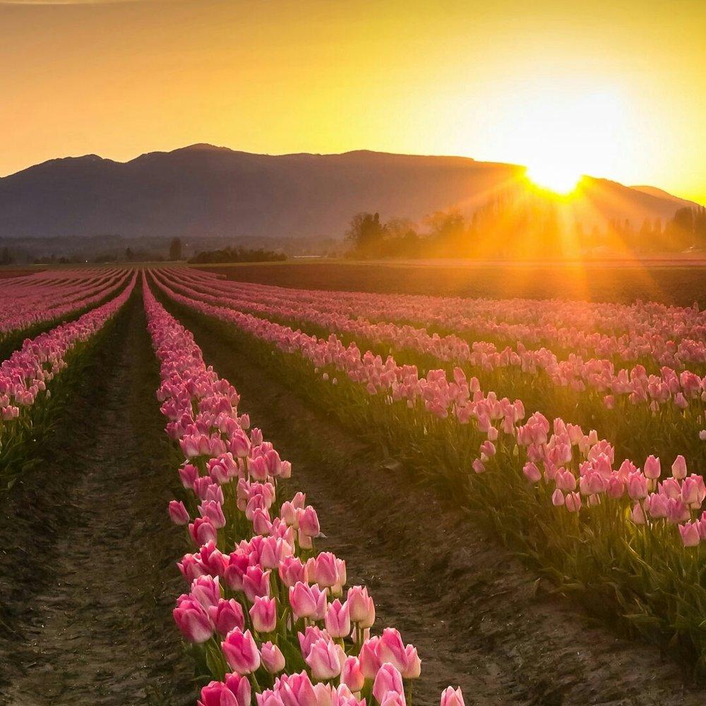 sunset--flowers-spring-antaso.jpg