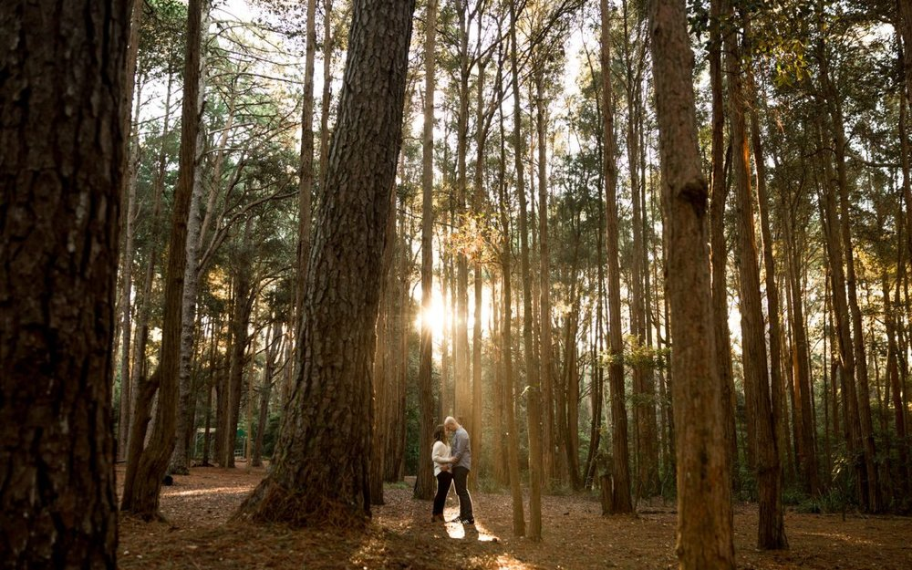 engagement-pine-forest-watagans-wedding-photographer-couples-shoot-in-olney-state-forest-bryce-noone-photography022-1200x750.jpg