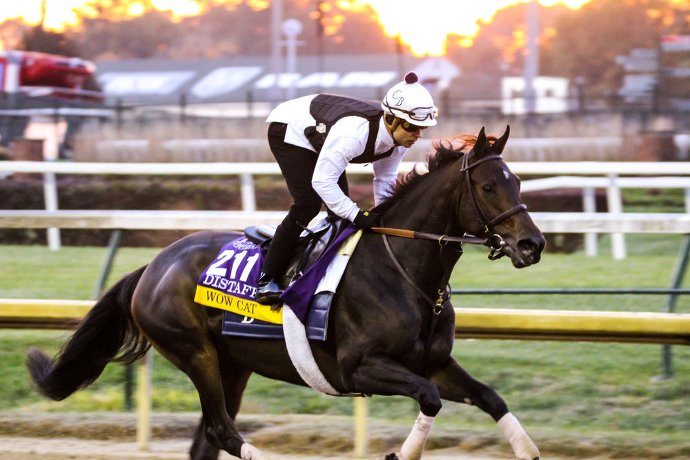 Breeders Cup Workouts 1