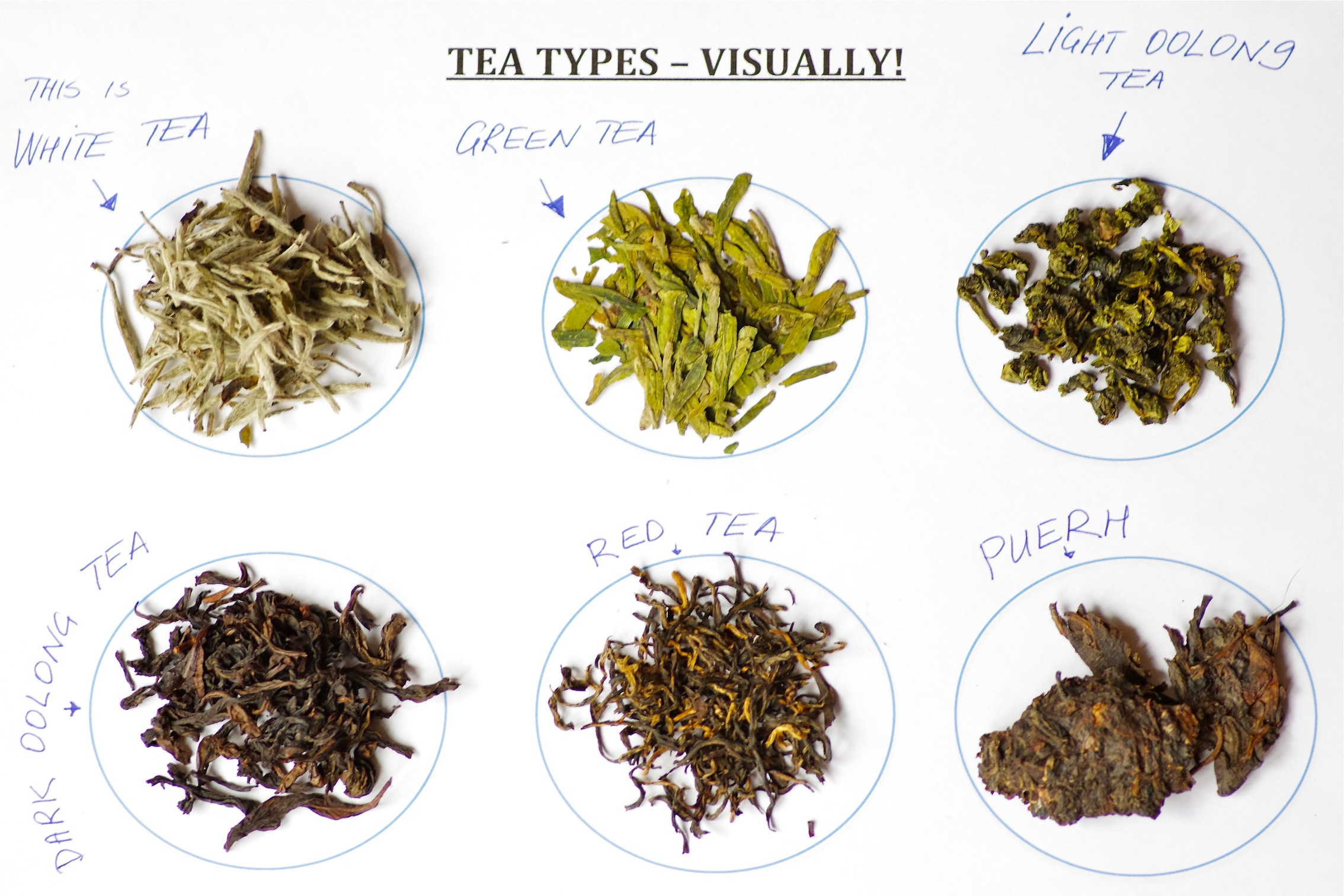 Types of Tea Visually