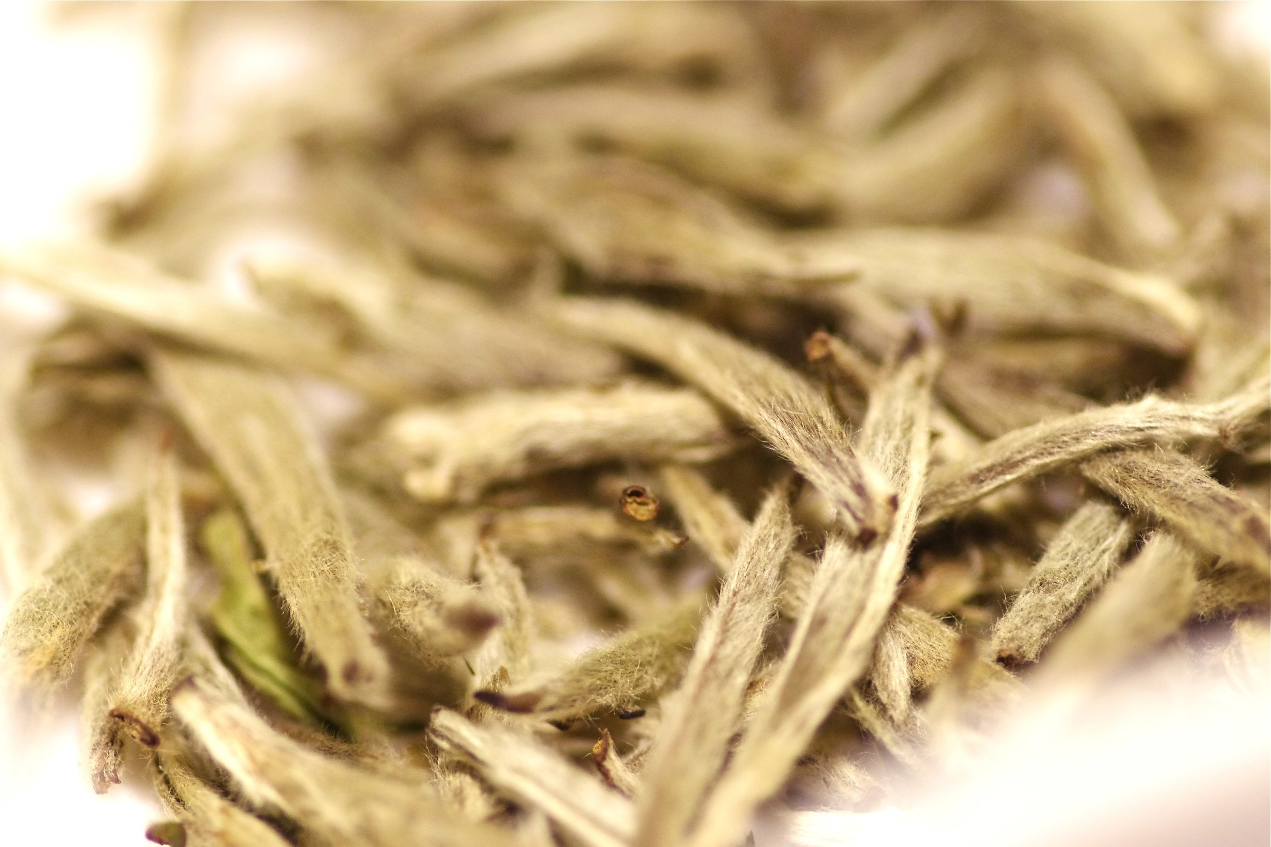 white tea buds