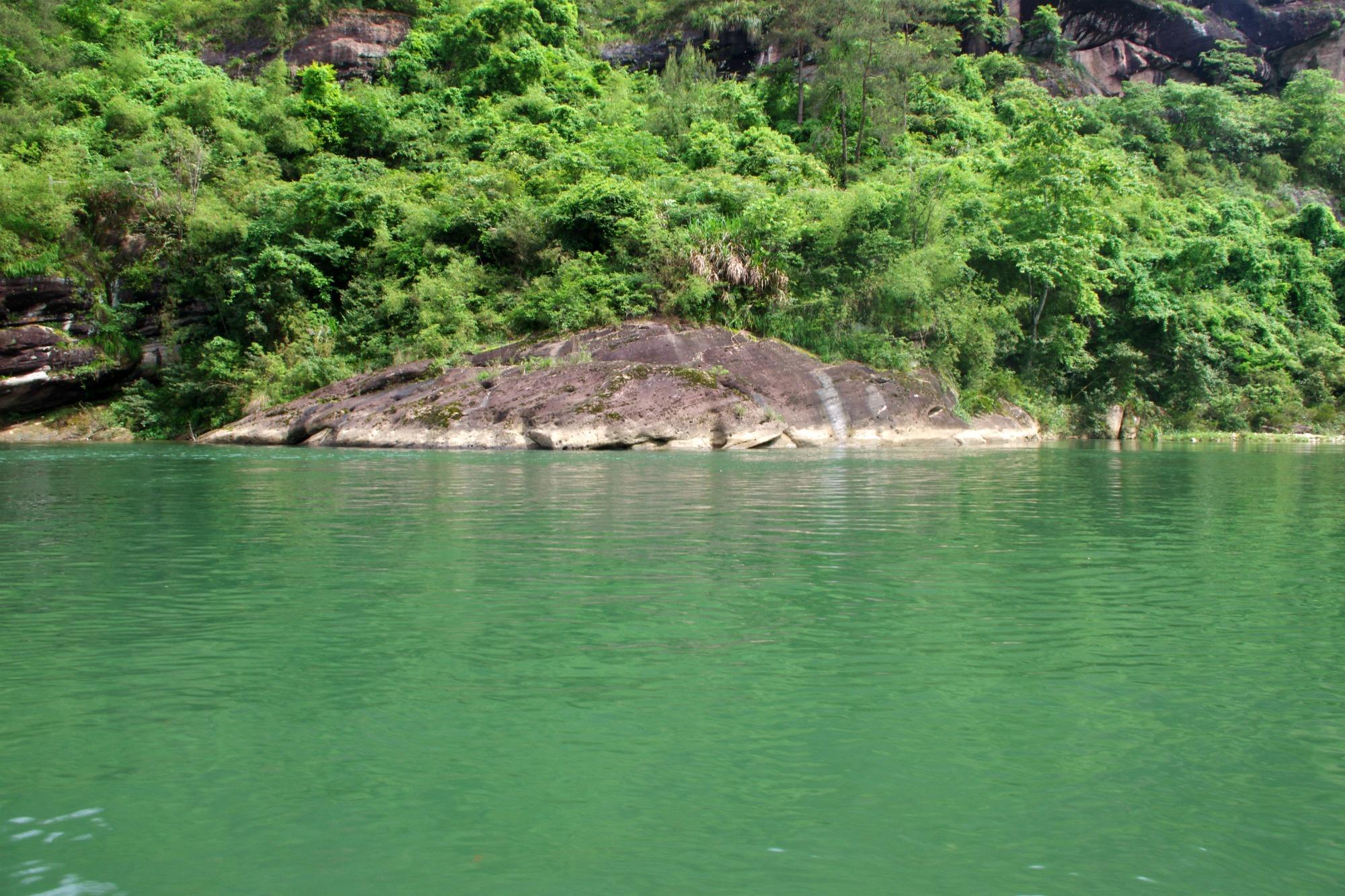 rock turtle