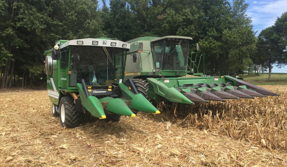 corn variety trial.jpg