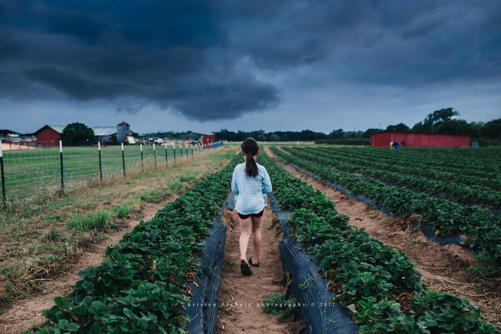 We picked our Strawberries right before the storm hit!