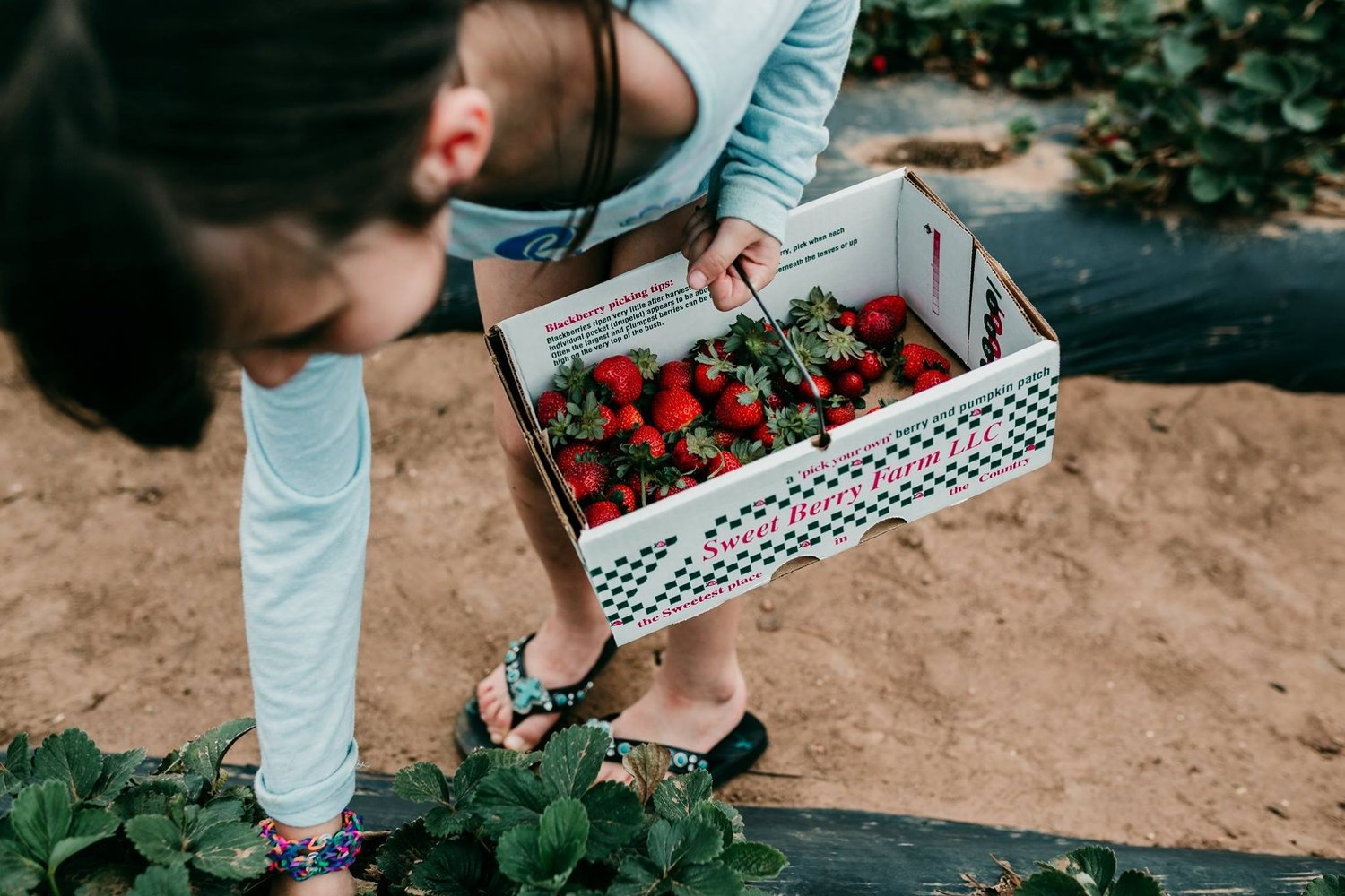 SWEETBERRY FARMS | SUMMERTIME BERRY PICKIN\' | MARBLE FALLS, TEXAS ...