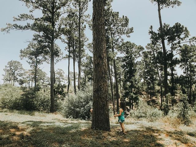 A love for piney woods 🌲✌🏼 I have so many friends asking how much cameras are and what's the best one. I always tell my fellow friends the best camera is the one they have with them at that moment. Taken with my iPhone and the @olloclip super wide angle lens!