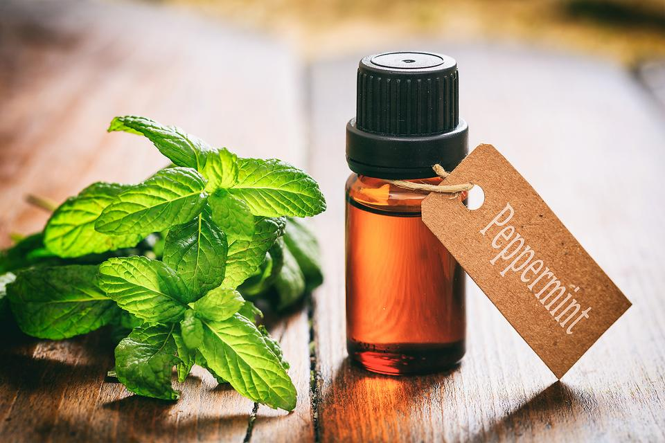 PEPPERMINT ESSENTIAL OIL AND ITS HEALING PROPERTIES