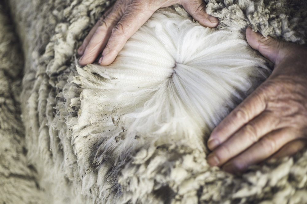 Beautiful wool sustainably grown on Forest Range