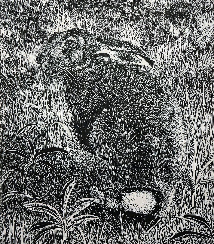 eurpean hare 16.jpg