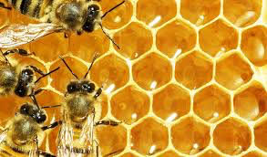 A bees nest