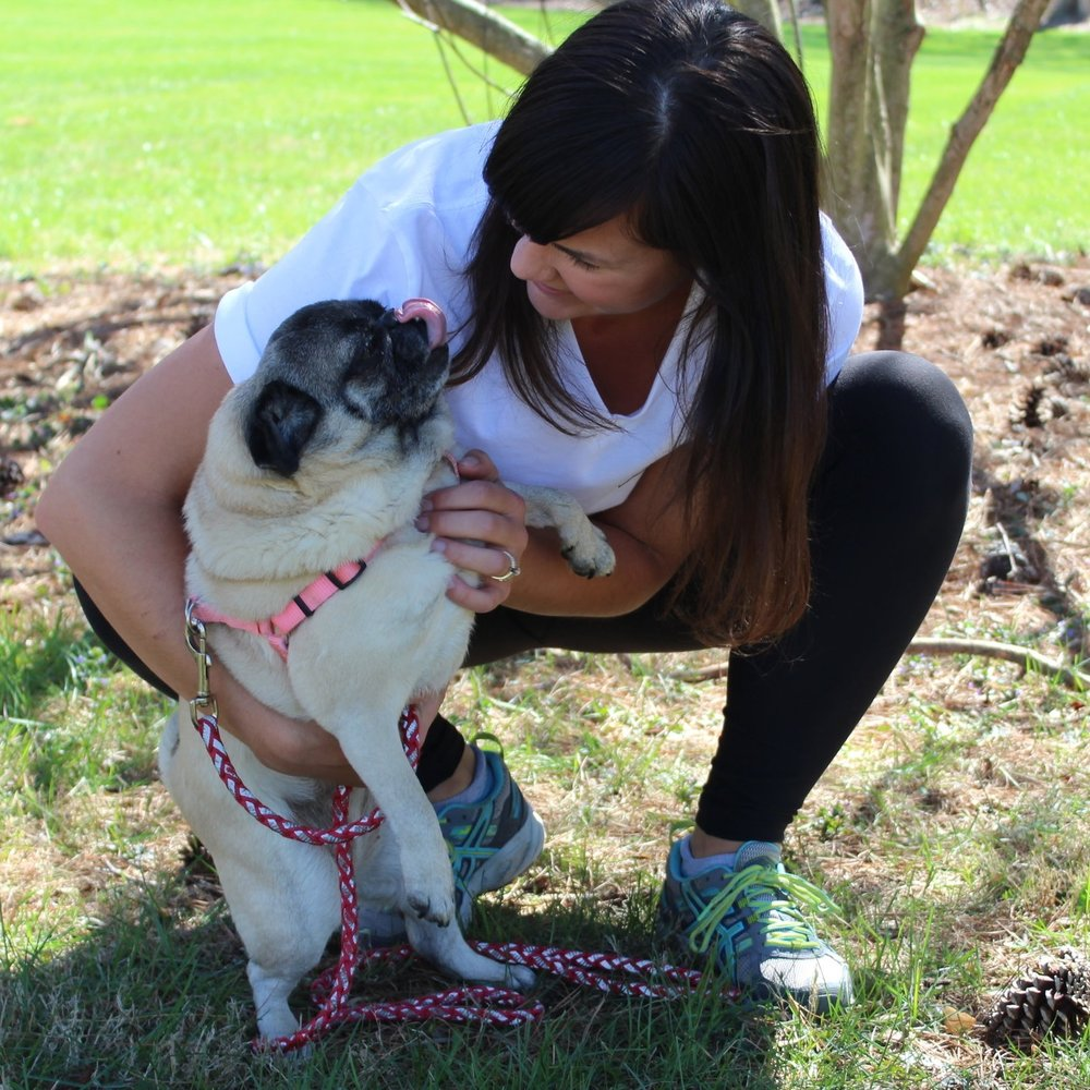 Pug, Pet Sitting, Professional Pet Care, Pet Care, Dog Walking
