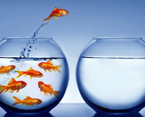 jumping-fish-1-495x400.jpg