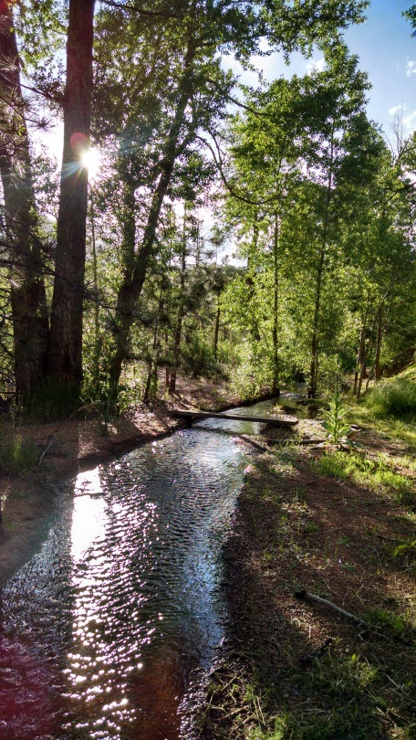 A guided Forest Bathing excursion is a simple, yet profound experience designed to promote healing and insight on all levels. Photo of Wild Divine Retreat Center by Tamara McDougall Herl