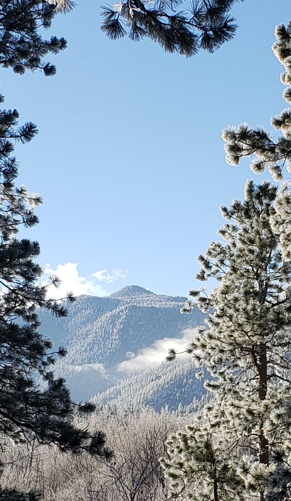 Snow capped mtns framed by trees 2018.jpg