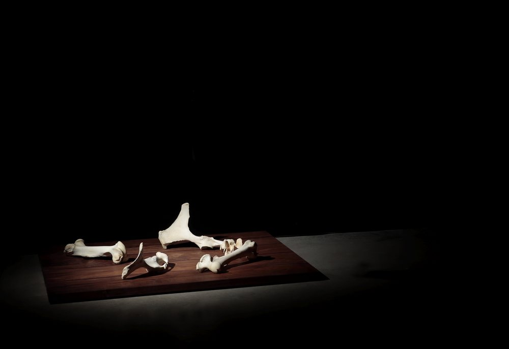 Nate Young,   Attempts At Seeing,  2017   Installation with light, sound, horse bones and walnut  Image courtesy of the Visual Arts Center of Richmond