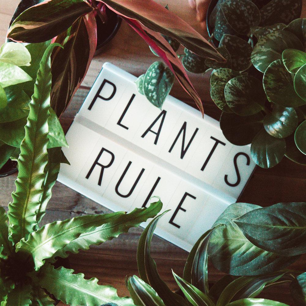 plantsrule
