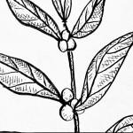 Coffee Branch 1 8