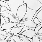 Flowering 5
