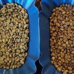 Sumatra beans, un-aged and aged side by side