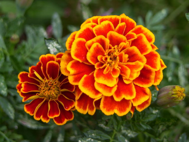 Marigold Counseling