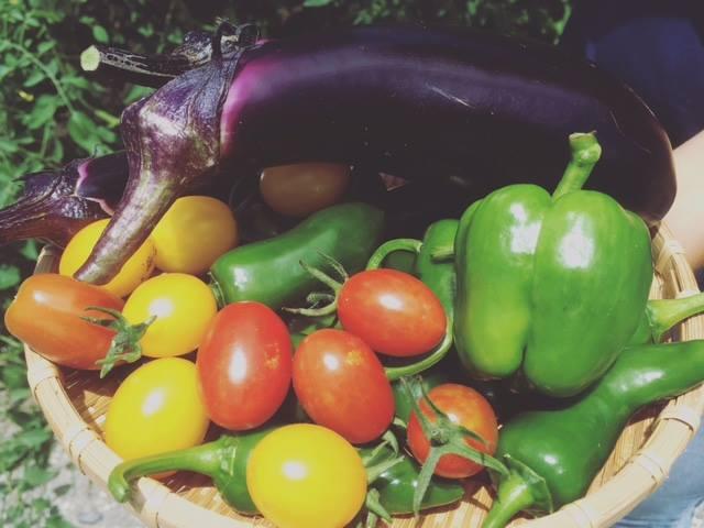 それでも、去年はこんなにたくさんのお野菜を収穫できました! トマトは数百個?採れた先から子どもたちが食べていました