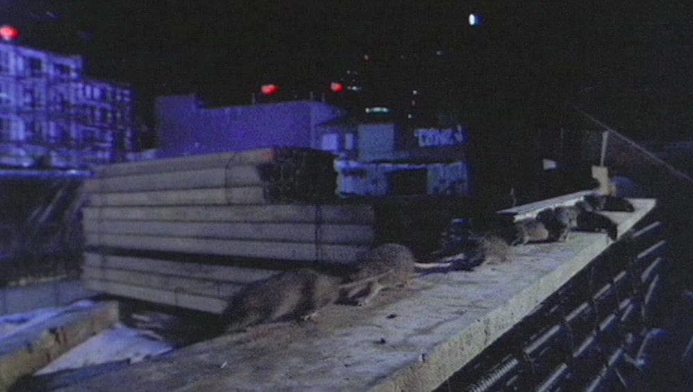 RATS on Plank1 copy.jpg