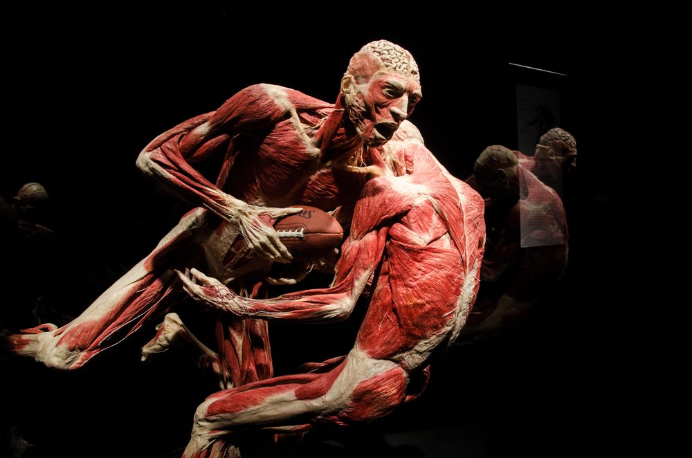 Photo: © Institute for Plastination 2017