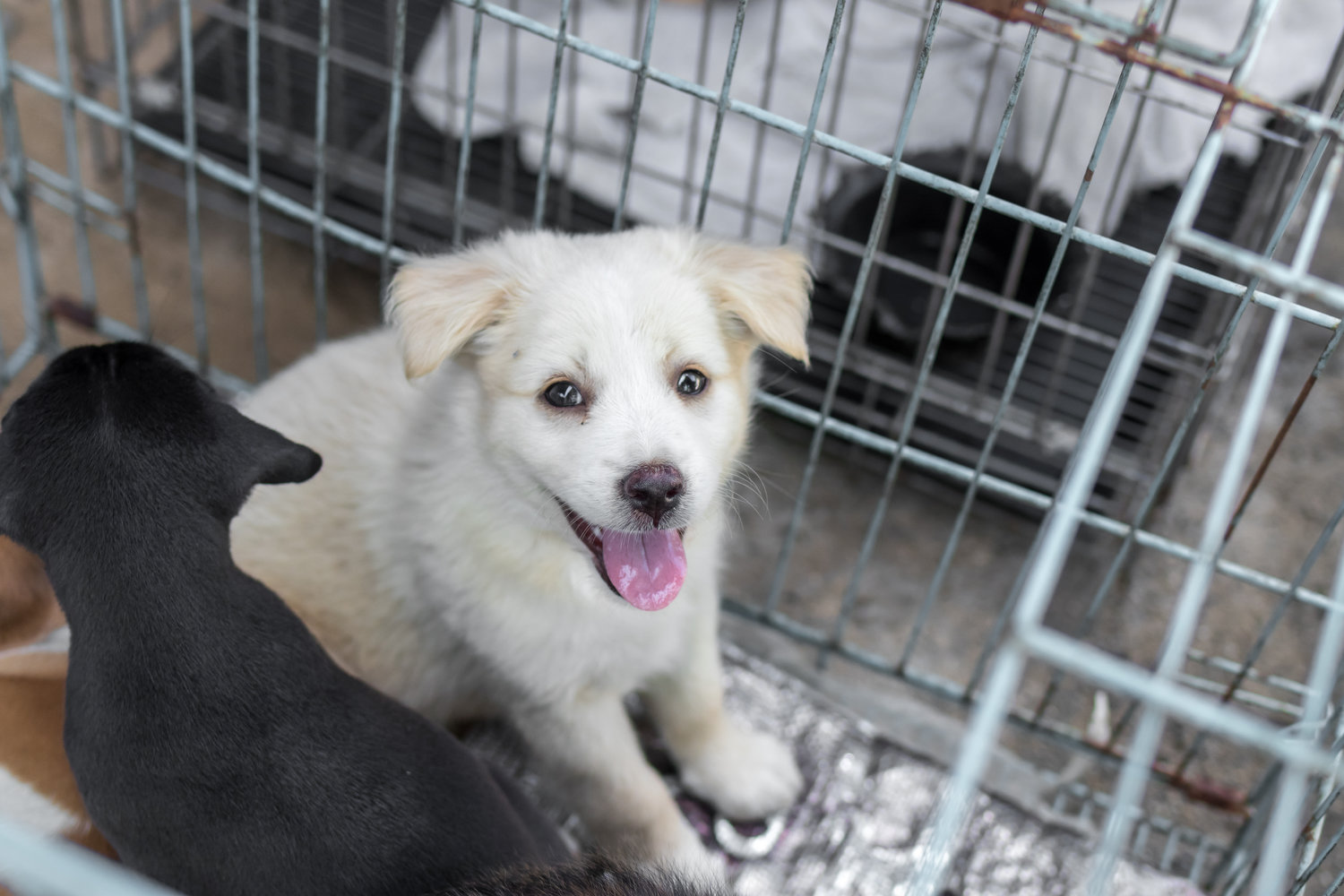 95a3df9b4b8 Mayor Garcetti  L.A. Has Reached  No-Kill  for Dogs in Animal Shelters —  Mommy in Los Angeles®