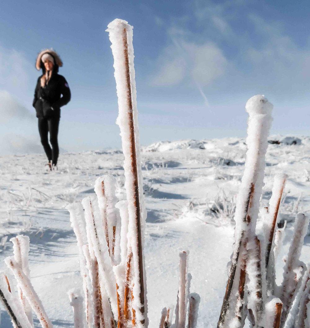 frosty-scene.jpg