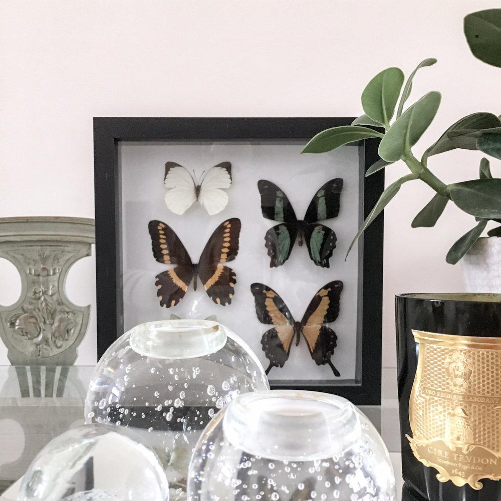 residential-case-study-butterflies.jpg
