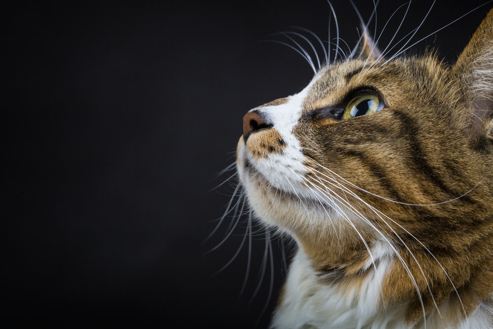 Tricks on photographing difficult subjects    - From your pets to your babies !
