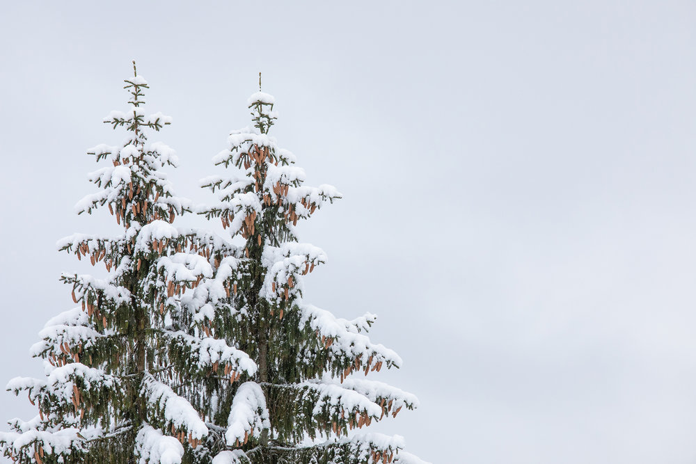Swiss-171218-winterland-0248.jpg