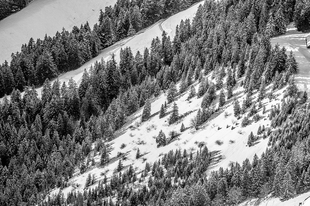 Swiss-201218-winterland-0534.jpg