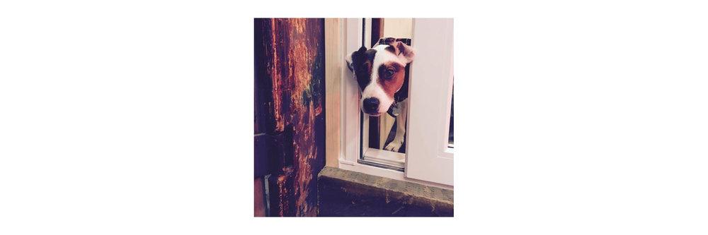 dogfriendly1.jpg