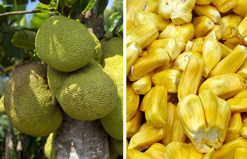 Whole jackfruit and its ripe fruit