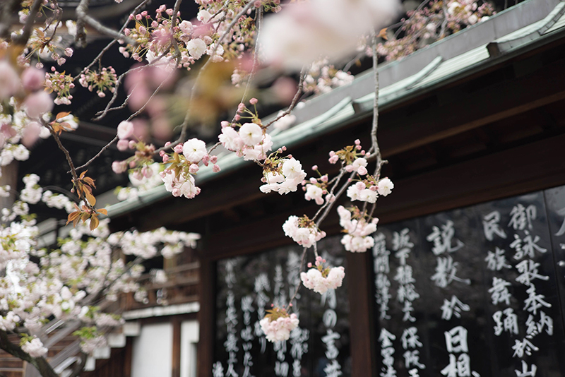 Japan In Full Bloom Powder Byrne Stories Luxury Family Travel And