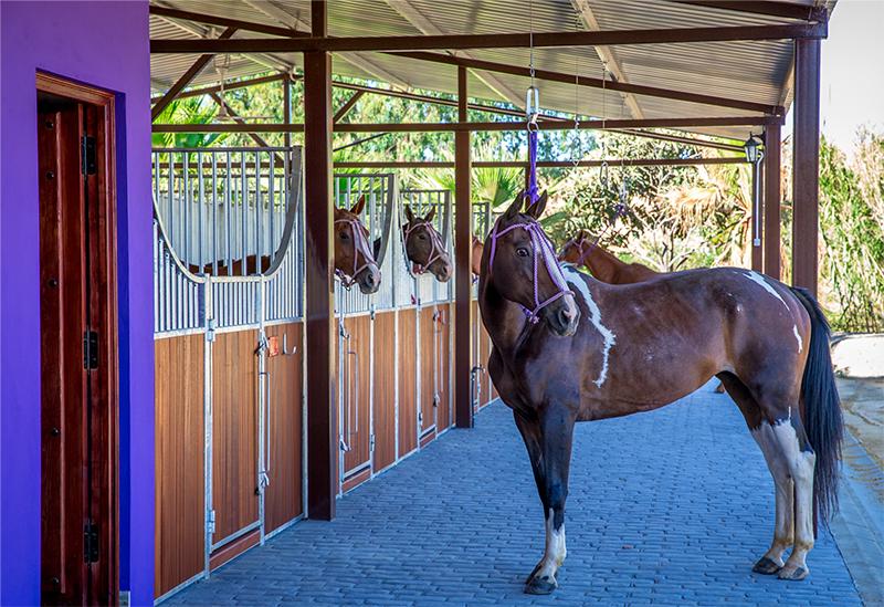 Turka-at-Pony-Line.jpg