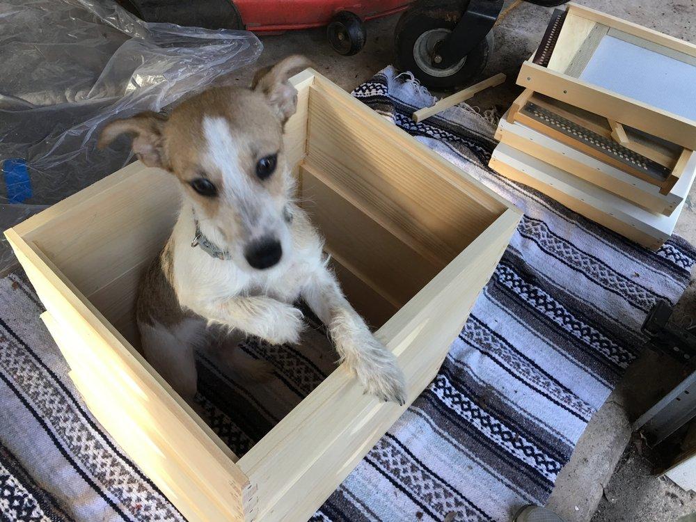 Our Little Helper