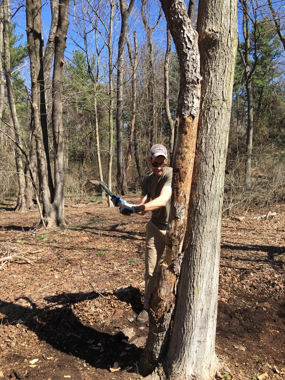 Clearing dead trees