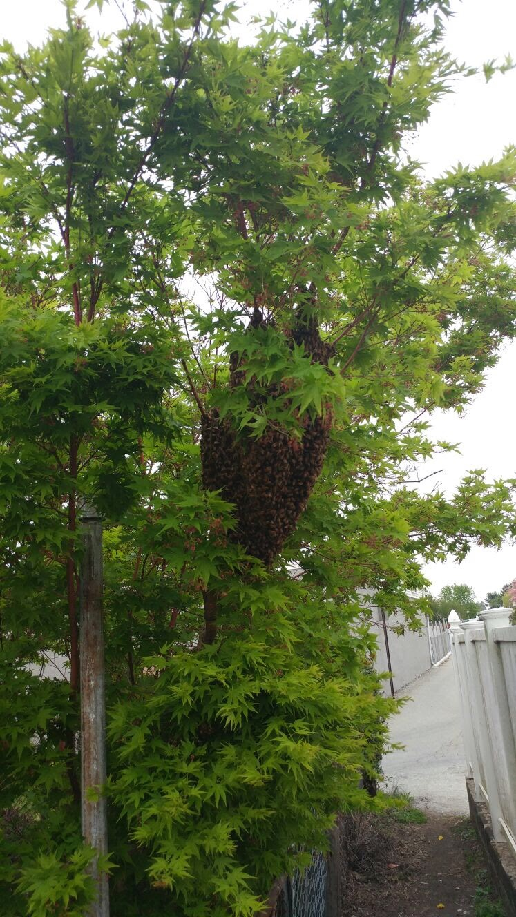 The Swarm!