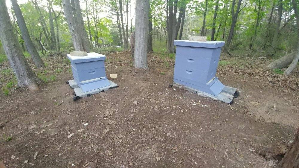 Both hives occupied and hard at work