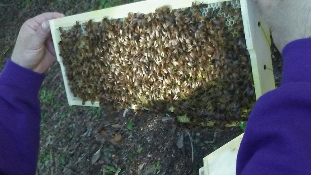 Solid frame of bees