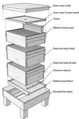 A standard Langstroth hive deconstructed